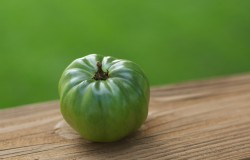 co mają wspólnego niedojrzały pomidor i zielony ziemniak?